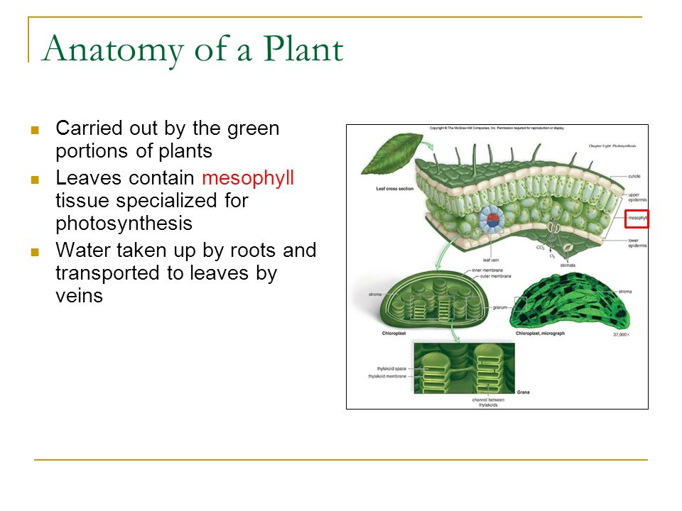 Photosynthesis Chapter Ppt Download