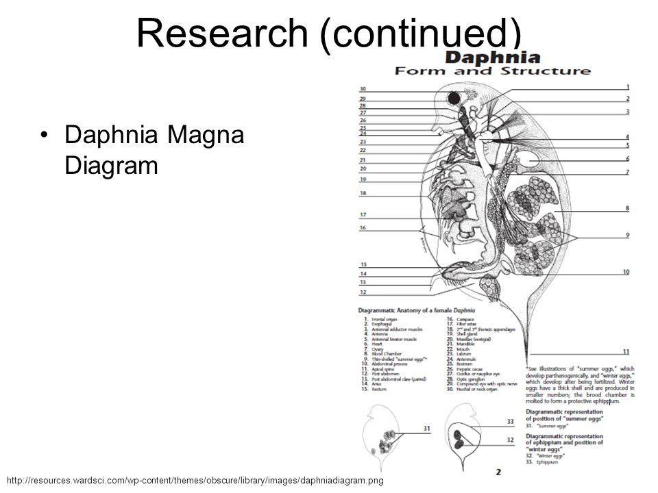 who's hyped?. - ppt video online download tj magna radio wiring diagram #10