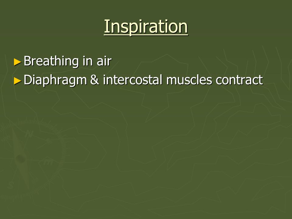Inspiration Breathing in air Diaphragm & intercostal muscles contract