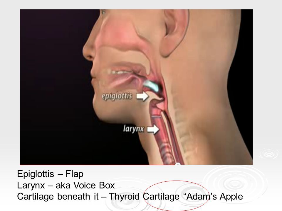Cardiopulmonary Anatomy And Physiology Ppt Video Online Download
