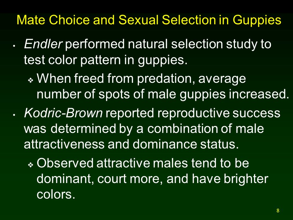 Intersexual selection in guppies