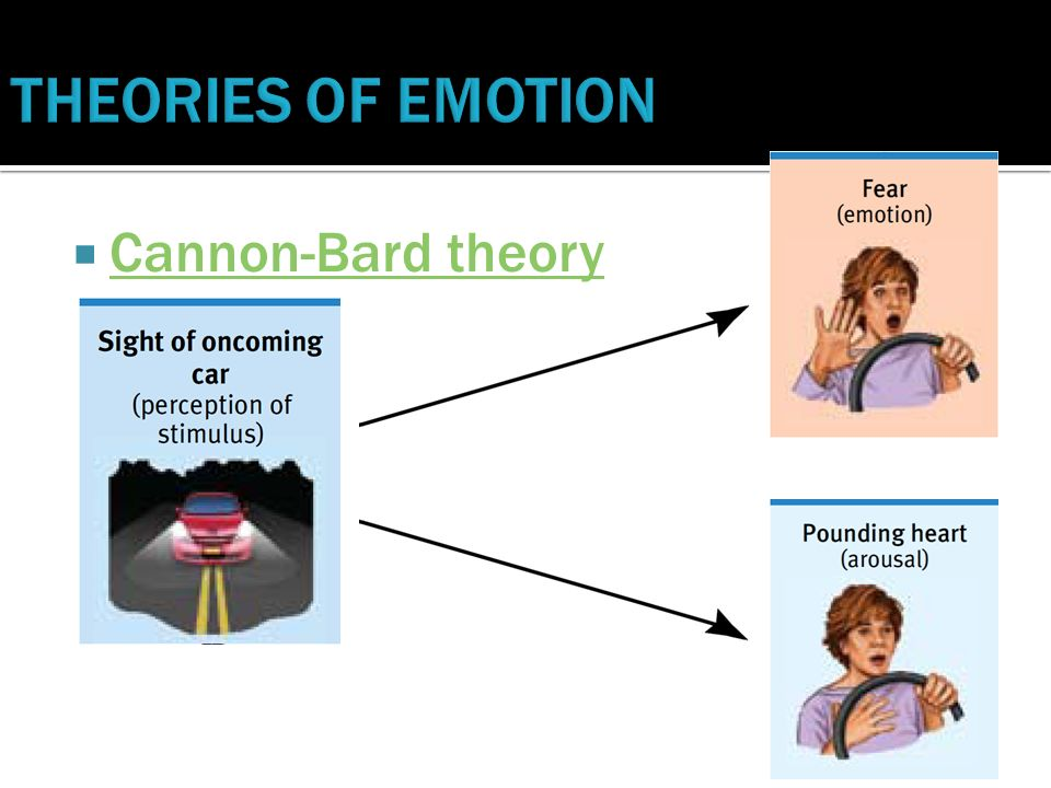 cannon bard theories of emotion