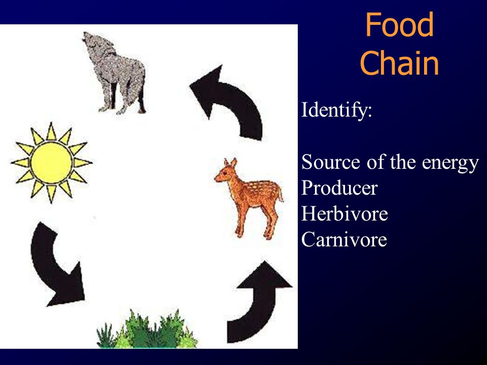 Food Chain Identify: Source of the energy Producer Herbivore Carnivore