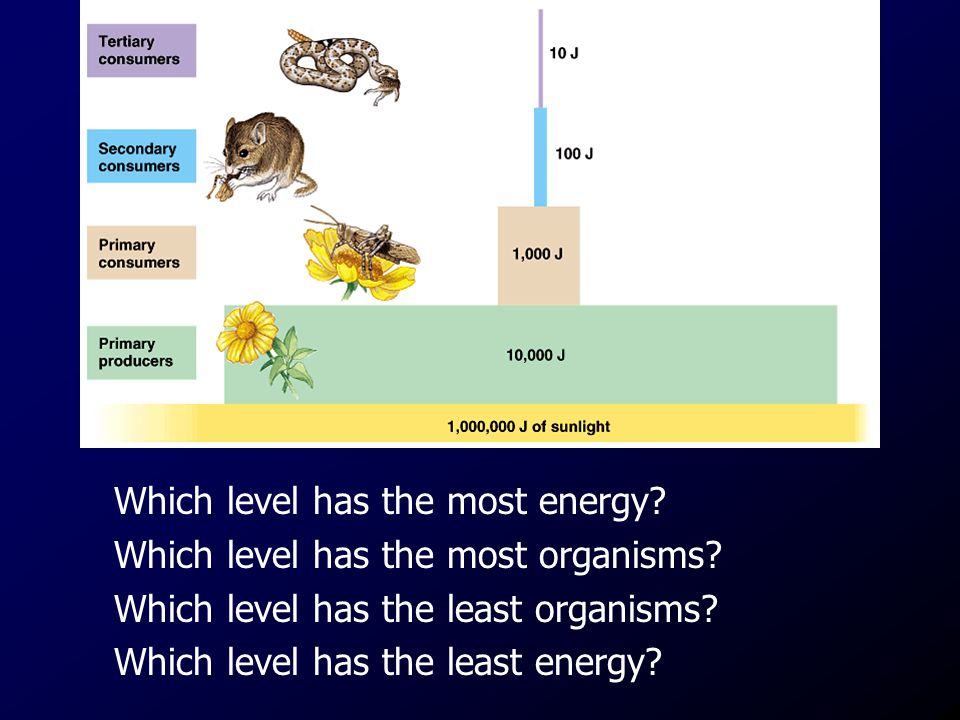 Which level has the most energy