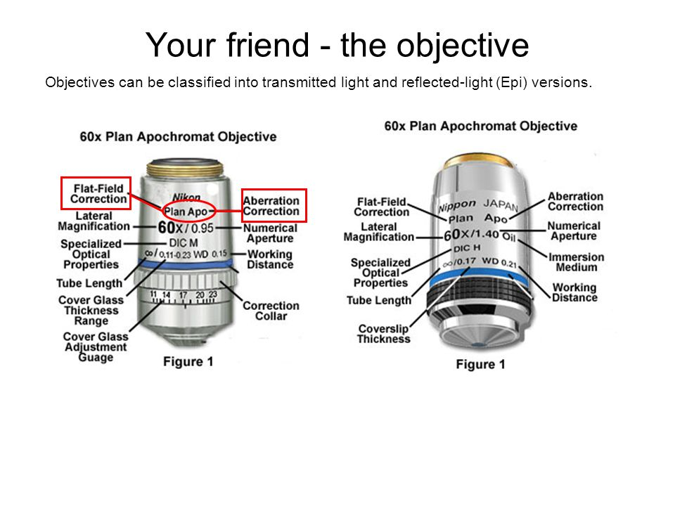 Your friend - the objective
