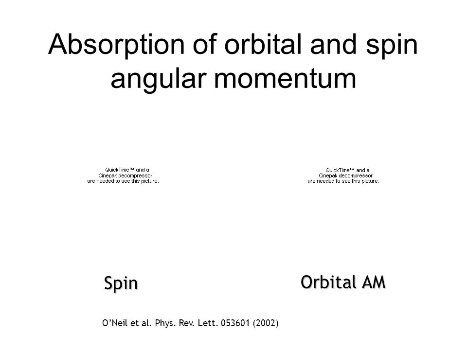 Absorption of orbital and spin angular momentum