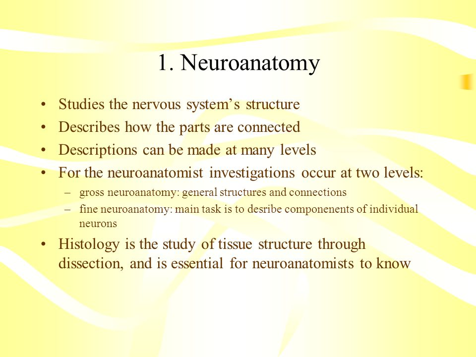 1. Neuroanatomy Studies the nervous system's structure