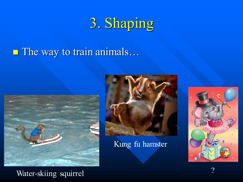 3. Shaping The way to train animals… Kung fu hamster