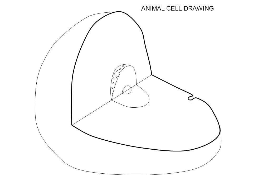 3 ANIMAL CELL DRAWING