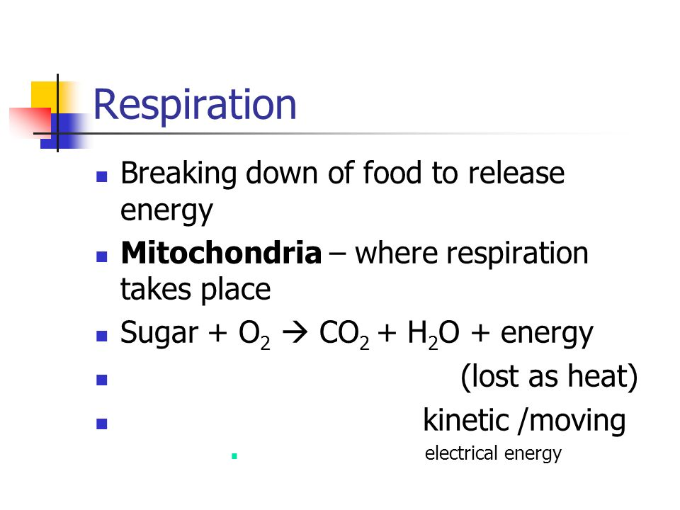 Respiration Breaking down of food to release energy
