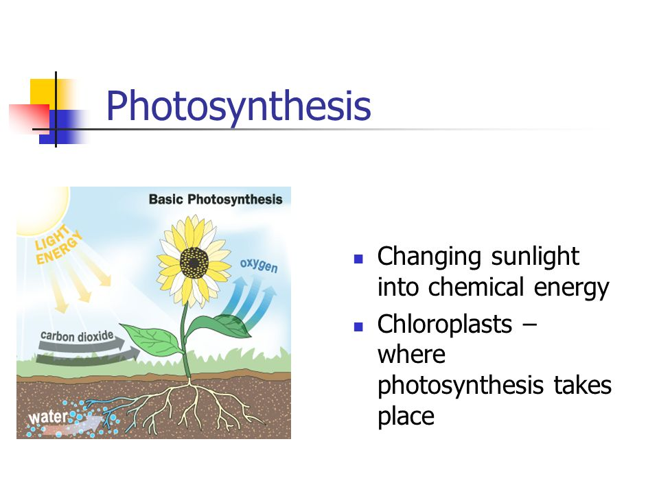 Photosynthesis Changing sunlight into chemical energy