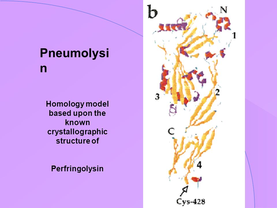 Homology model based upon the known crystallographic structure of