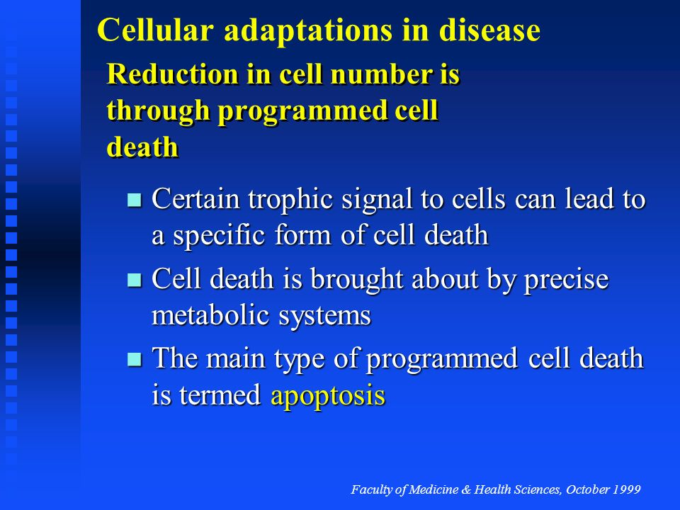 Reduction in cell number is through programmed cell death