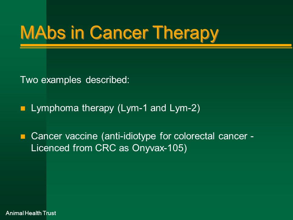 MAbs in Cancer Therapy Two examples described: