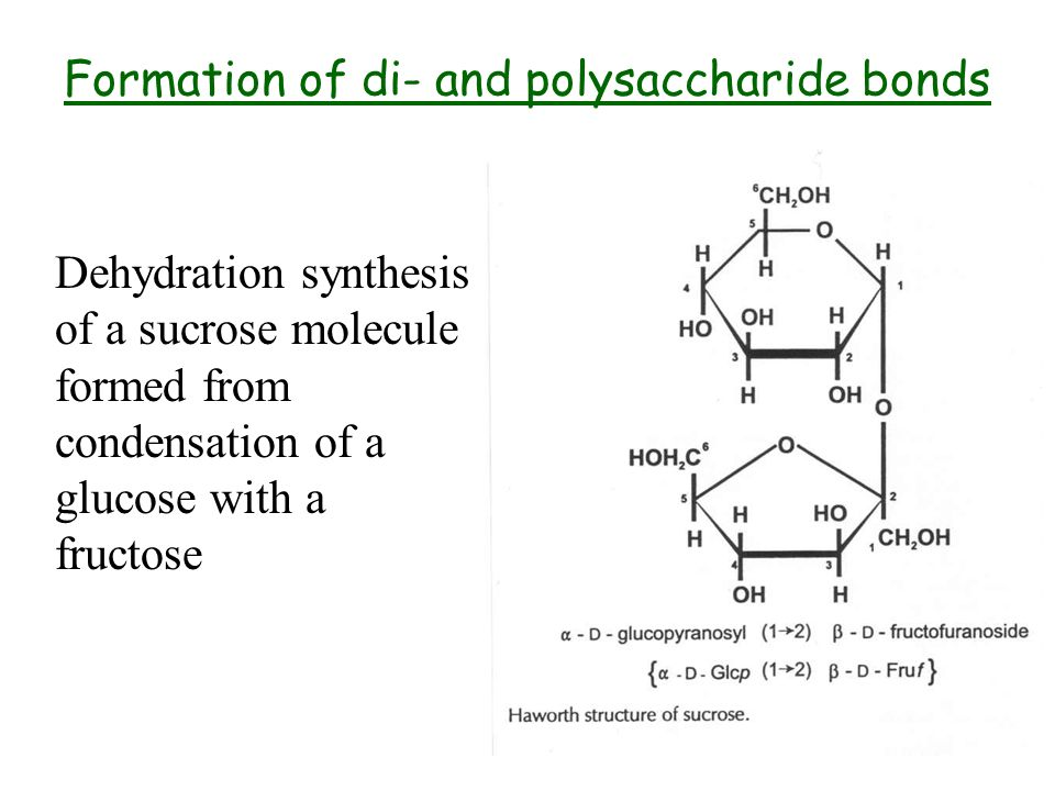 Formation of di- and polysaccharide bonds