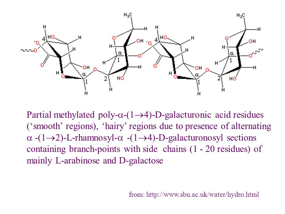 Partial methylated poly-a-(14)-D-galacturonic acid residues ('smooth' regions), 'hairy' regions due to presence of alternating a -(12)-L-rhamnosyl-a -(14)-D-galacturonosyl sections containing branch-points with side chains (1 - 20 residues) of mainly L-arabinose and D-galactose