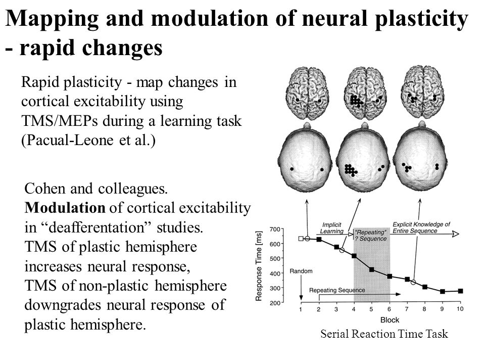 Mapping and modulation of neural plasticity - rapid changes