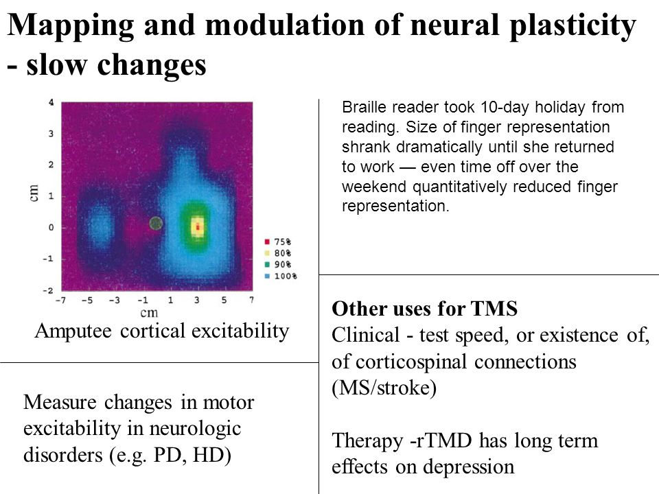 Mapping and modulation of neural plasticity - slow changes