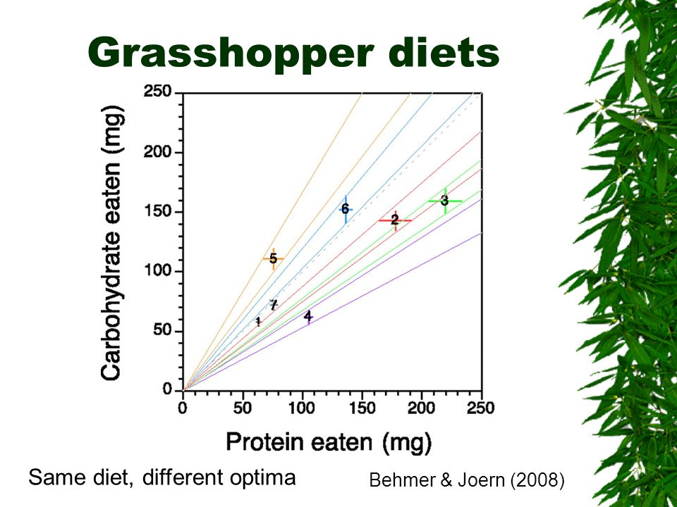 Grasshopper diets Same diet, different optima Behmer & Joern (2008)