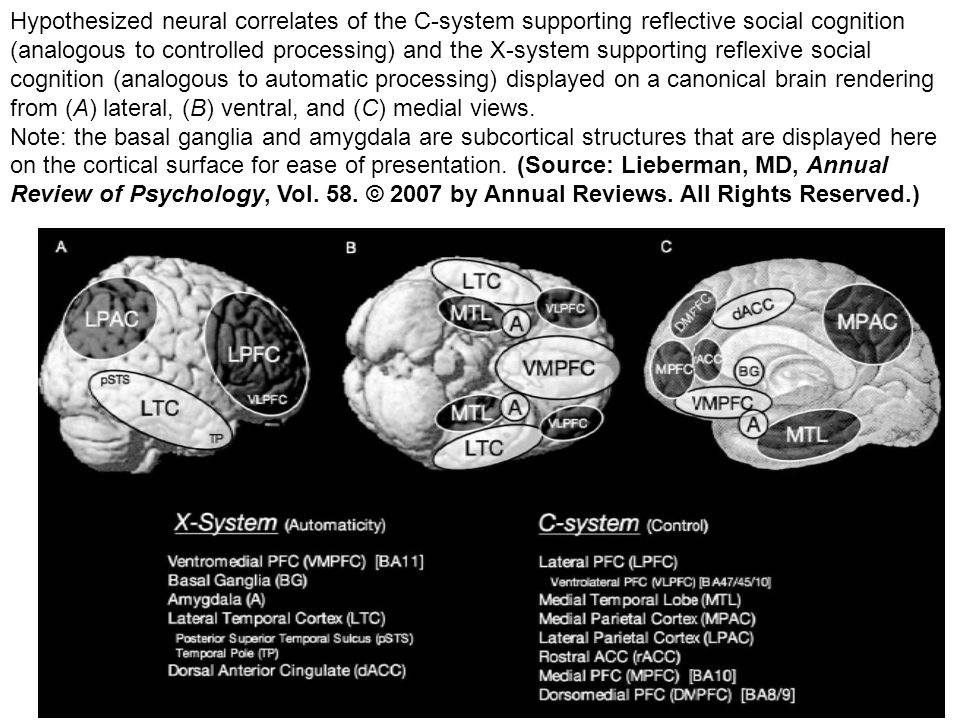 Hypothesized neural correlates of the C-system supporting reflective social cognition (analogous to controlled processing) and the X-system supporting reflexive social cognition (analogous to automatic processing) displayed on a canonical brain rendering from (A) lateral, (B) ventral, and (C) medial views.