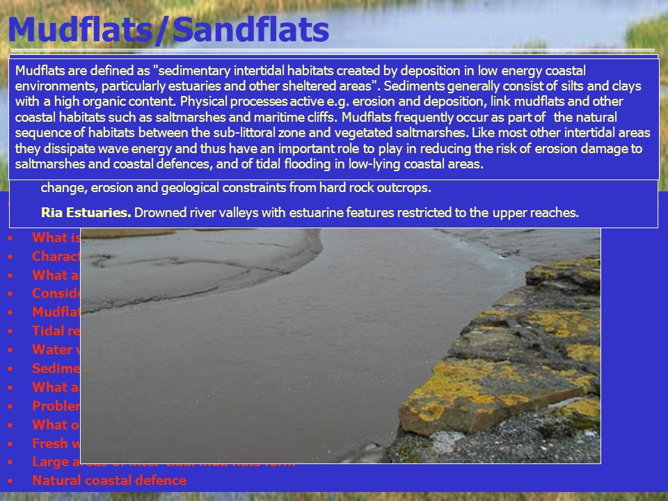 Mudflats/Sandflats There are four main types of estuary: