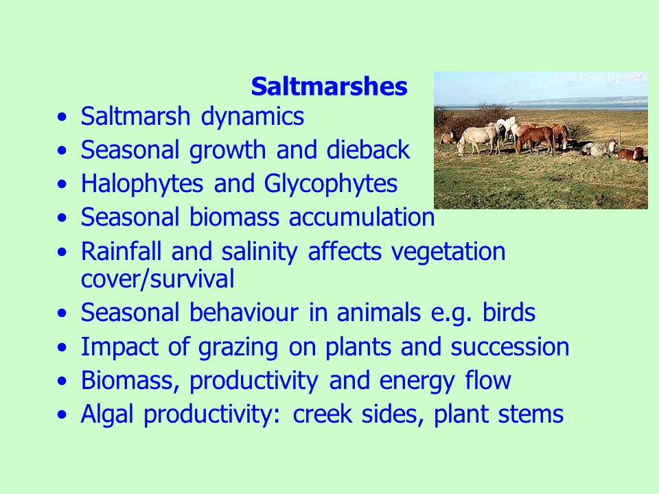 Saltmarshes Saltmarsh dynamics. Seasonal growth and dieback. Halophytes and Glycophytes. Seasonal biomass accumulation.