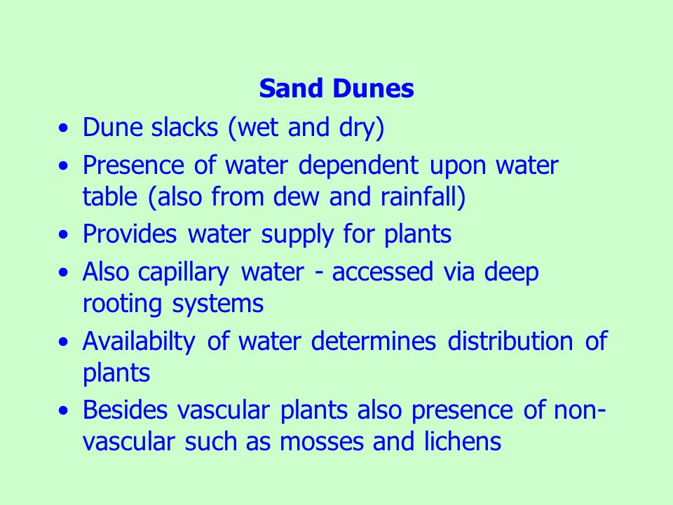 Sand Dunes Dune slacks (wet and dry) Presence of water dependent upon water table (also from dew and rainfall)