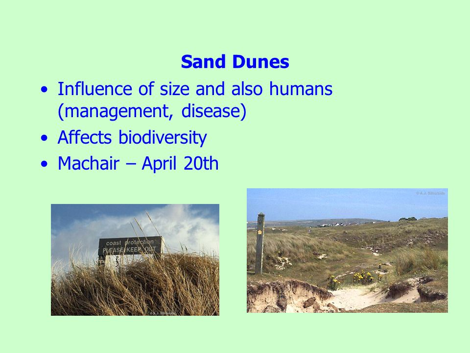 Sand Dunes Influence of size and also humans (management, disease) Affects biodiversity.