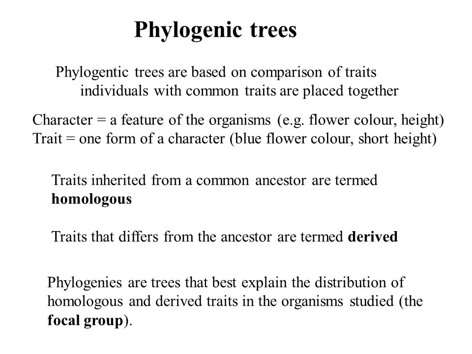 Phylogenic trees Phylogentic trees are based on comparison of traits