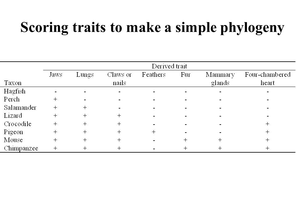 Scoring traits to make a simple phylogeny
