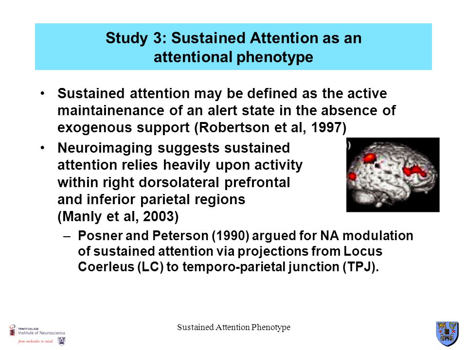 Study 3: Sustained Attention as an attentional phenotype