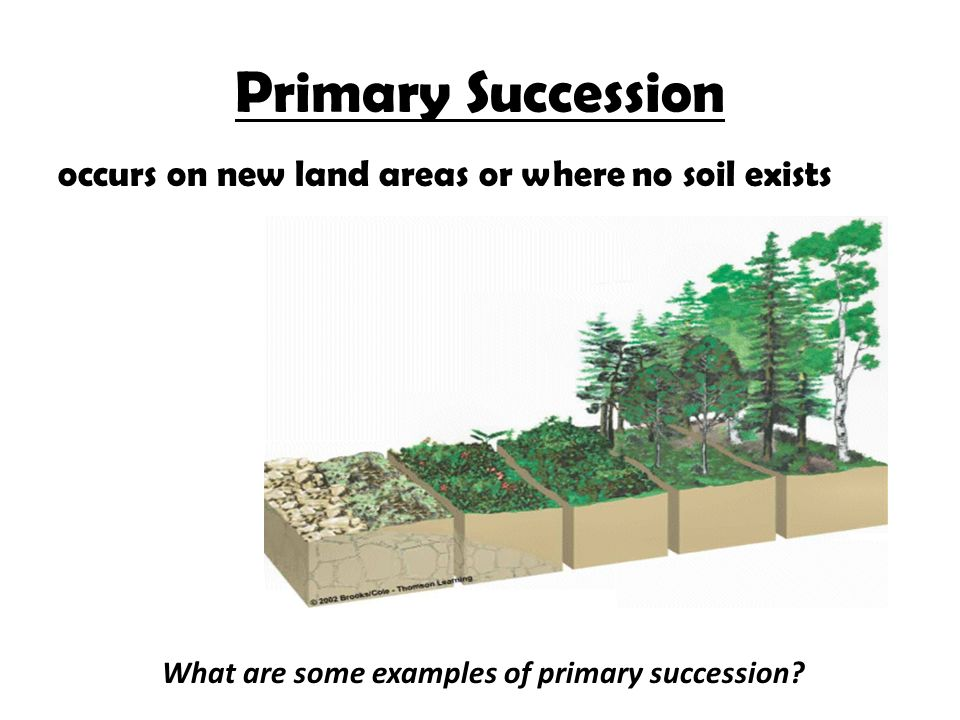 Chapter 5 How Ecosystems Work Ppt Video Online Download
