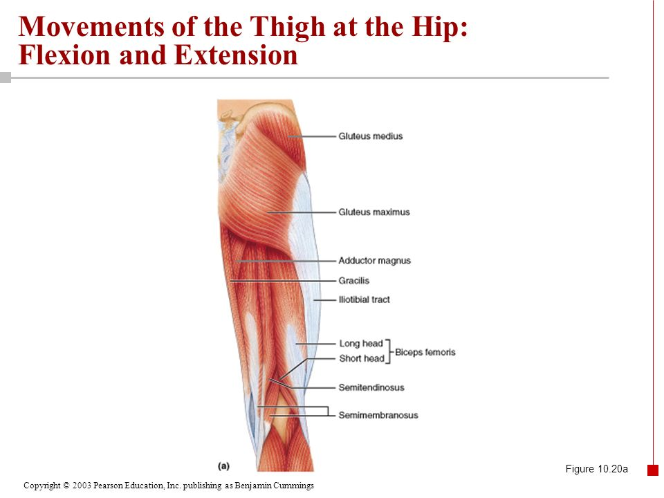 Chapter 10 The Muscular System Part H Ppt Download