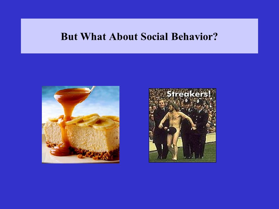 But What About Social Behavior