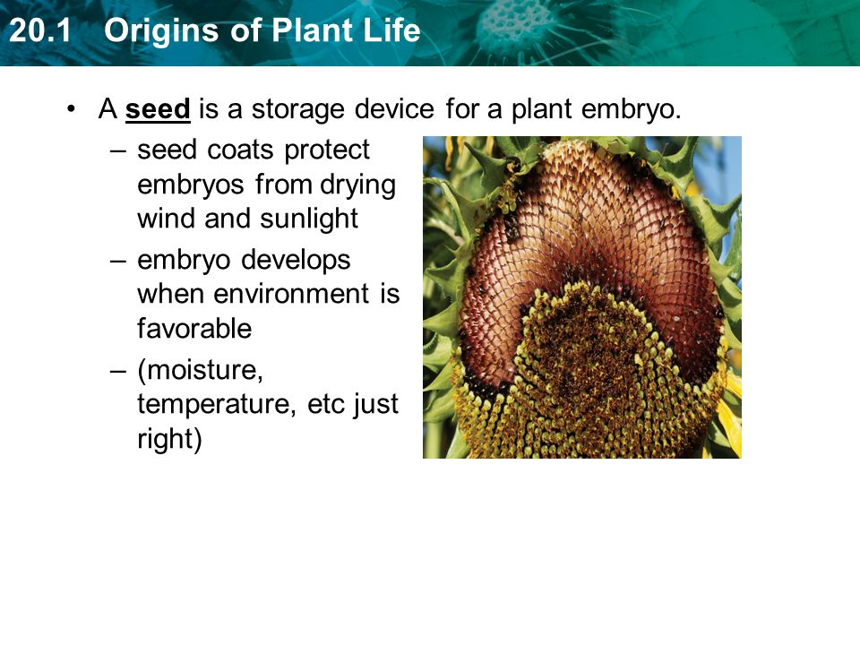 A seed is a storage device for a plant embryo.