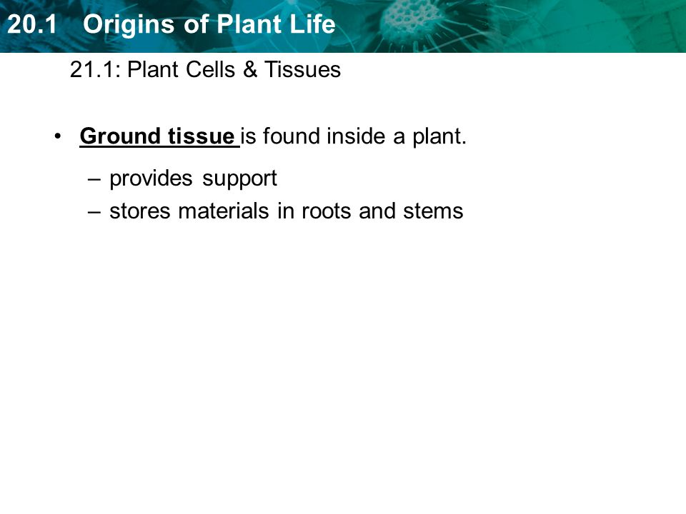21.1: Plant Cells & Tissues Ground tissue is found inside a plant.