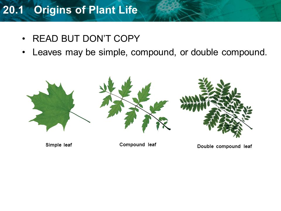 Leaves may be simple, compound, or double compound.