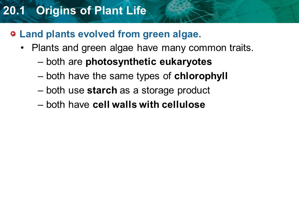Land plants evolved from green algae.