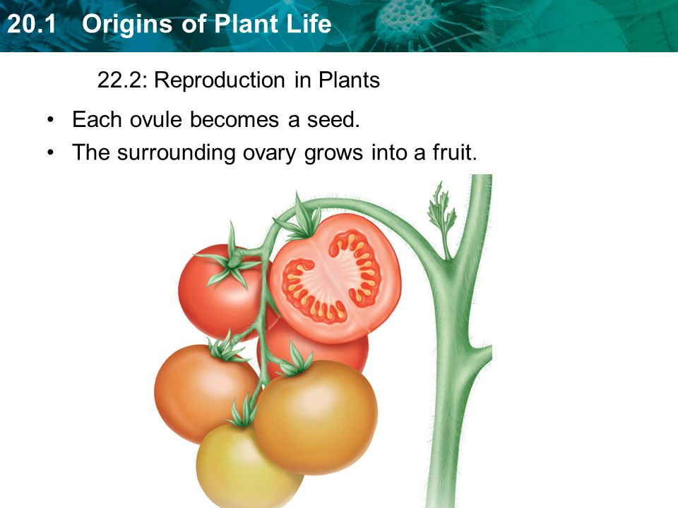 22.2: Reproduction in Plants
