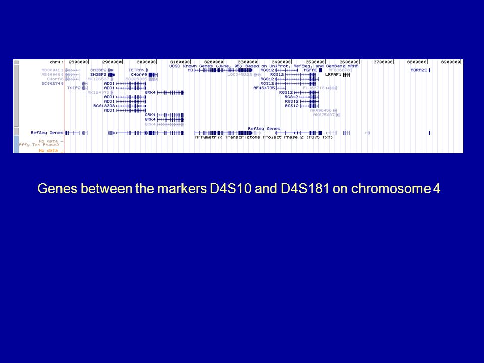 Genes between the markers D4S10 and D4S181 on chromosome 4