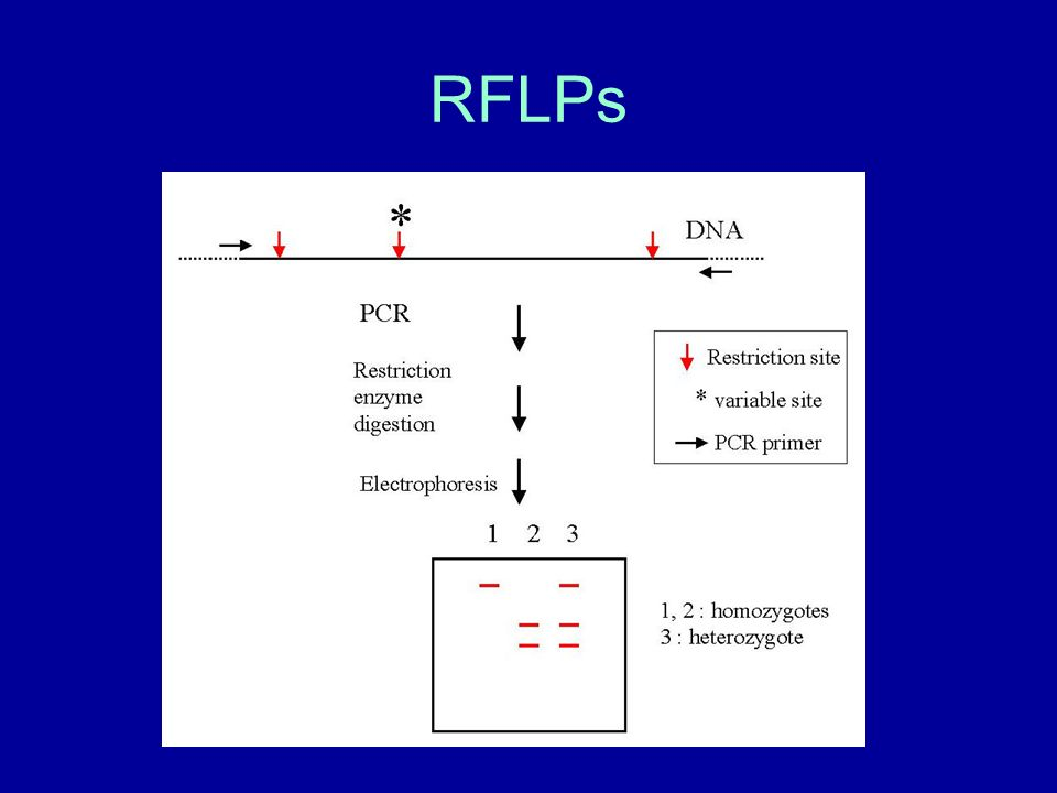 RFLPs