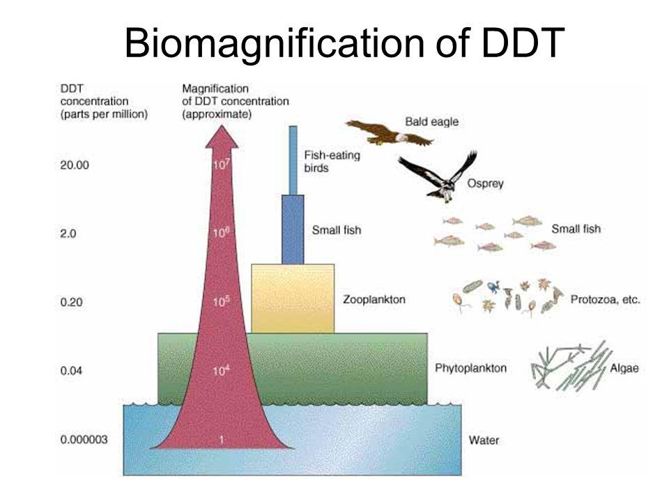 17 biomagnification of ddt