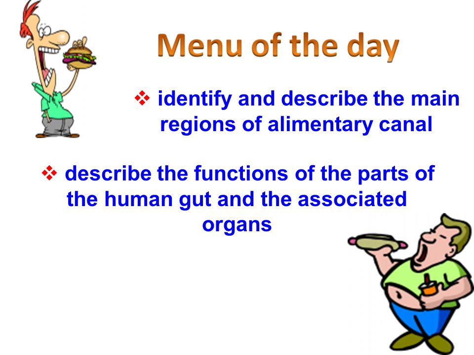 identify and describe the main regions of alimentary canal