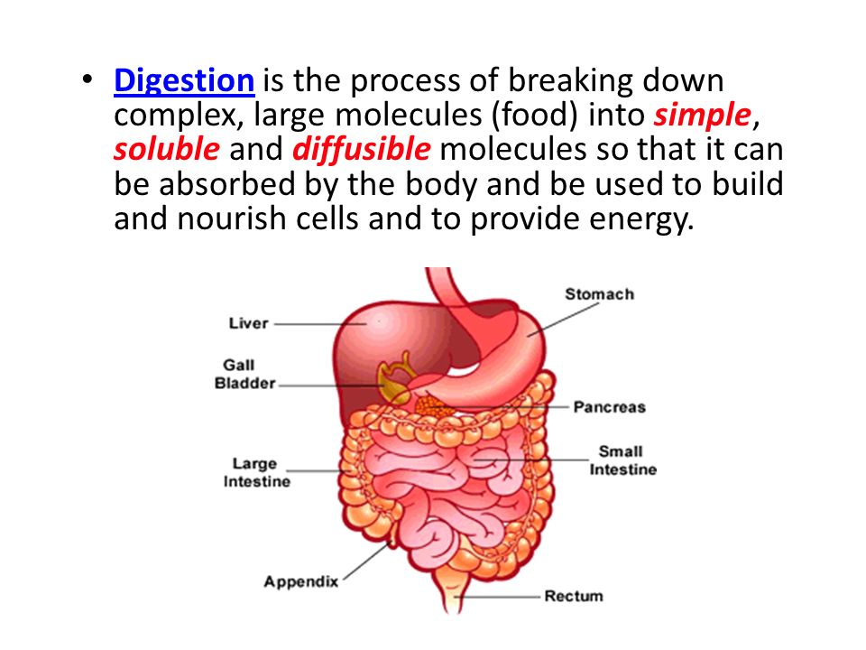 Digestion is the process of breaking down complex, large molecules (food) into simple, soluble and diffusible molecules so that it can be absorbed by the body and be used to build and nourish cells and to provide energy.
