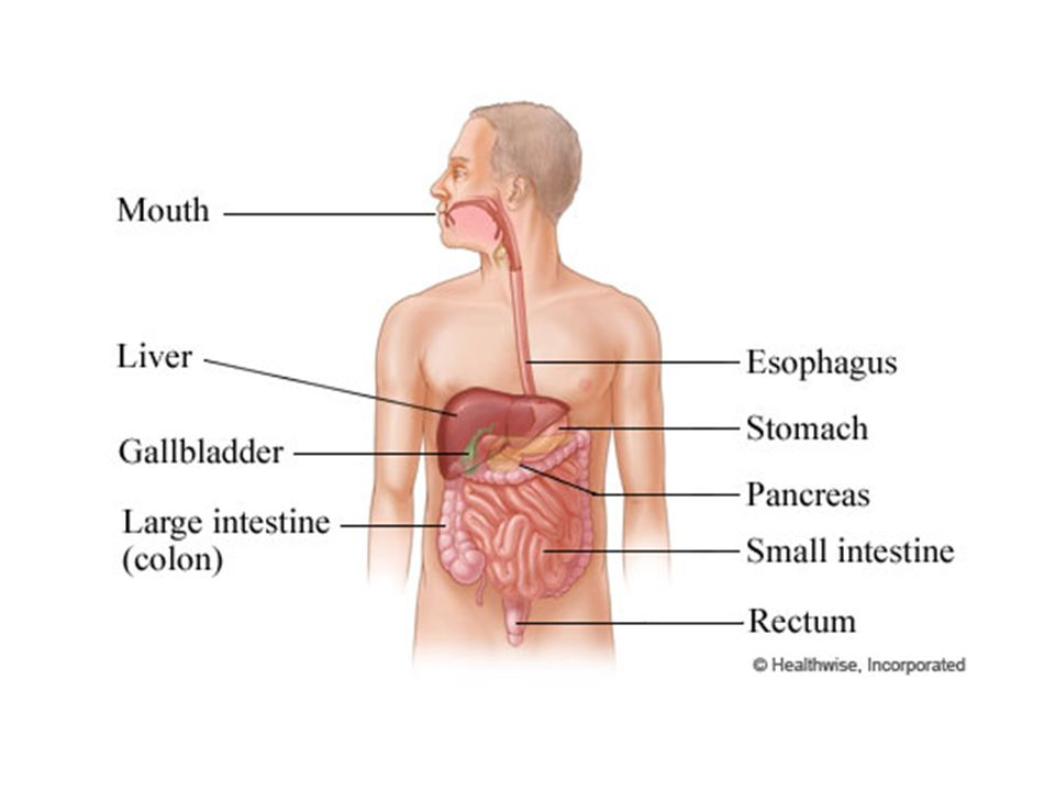 The Digestive System 3.5 & ppt video online download