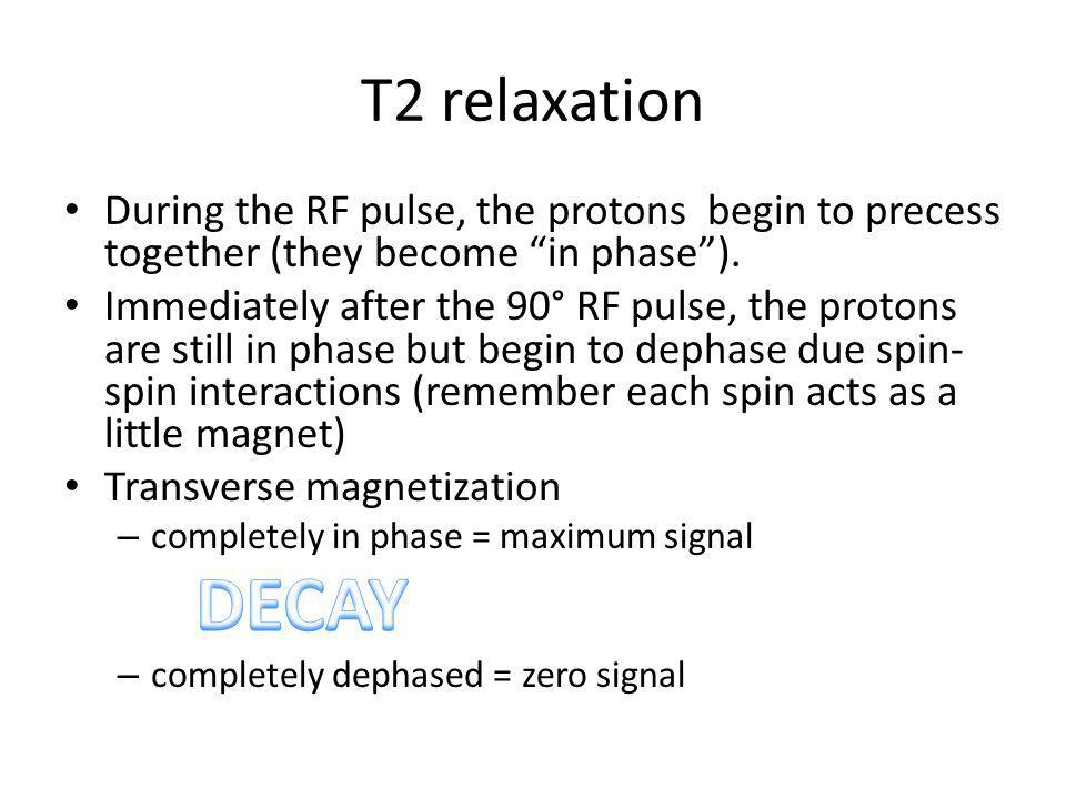 T2 relaxation During the RF pulse, the protons begin to precess together (they become in phase ).