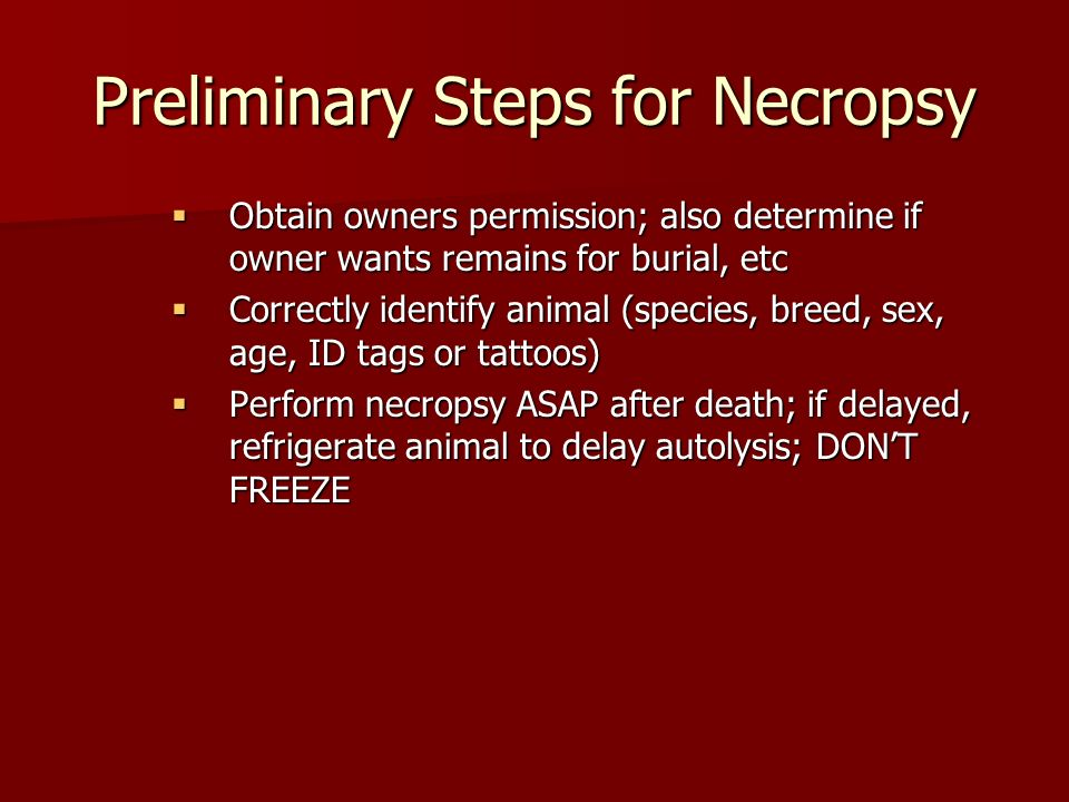 Preliminary Steps For Necropsy