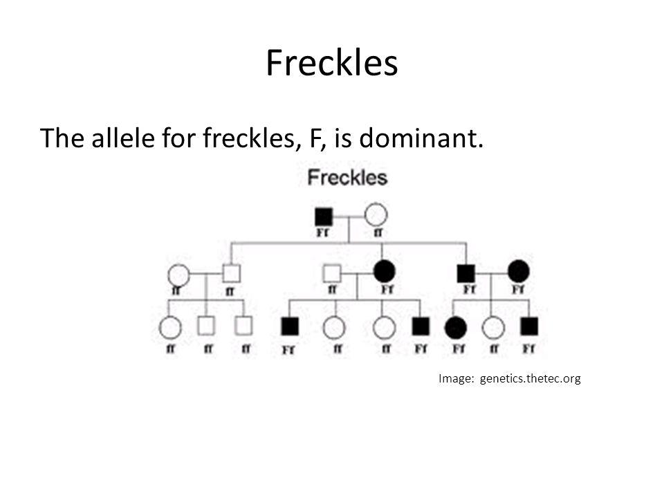 Pedigree Diagram Freckles Wiring Diagram Services