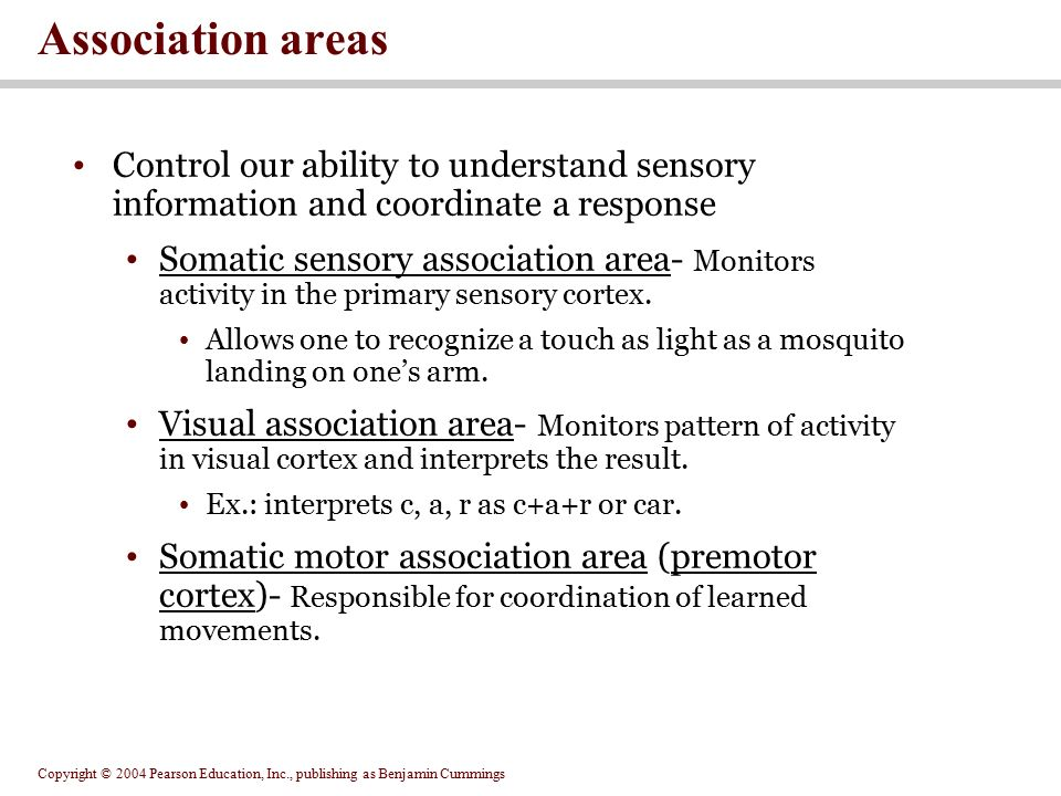 Association areas Control our ability to understand sensory information and coordinate a response.