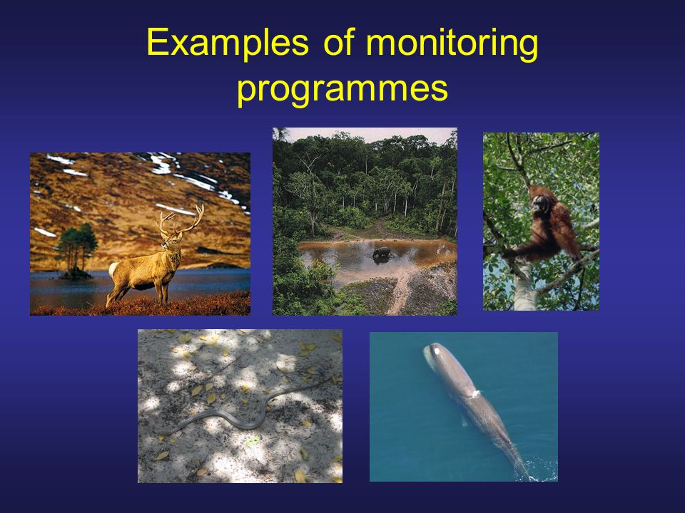 Examples of monitoring programmes